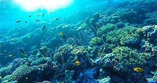 Barreira de coral