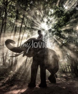 Quadro Mahout na província de Surin Tailândia elefante