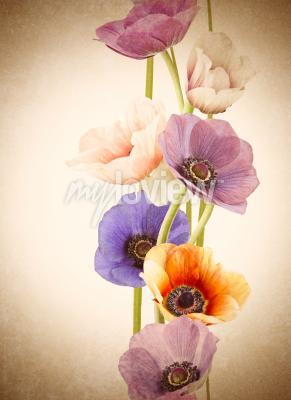 Fotomural Flores coloridas frescas da papoila
