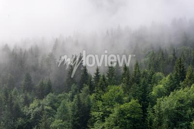 Fotomural Visão geral da floresta perene
