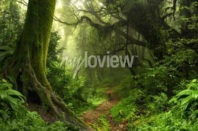 Fotomural Floresta tropical