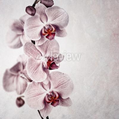Fotomural Uma delicada orquídea rosa em fundo de estilo vintage desbotado