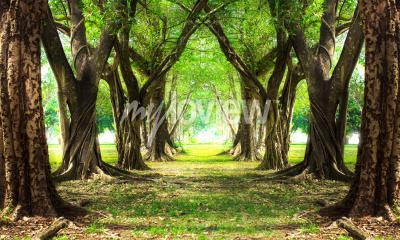 Fotomural Floresta mágica verde