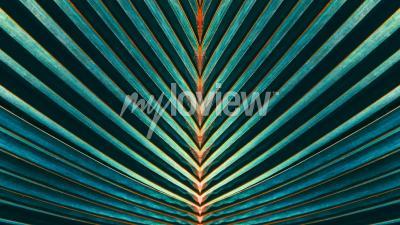 Fotomural Listrado de folha de palmeira