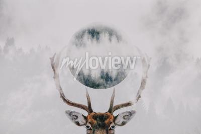 Fotomural Double exposure of an antler and forest