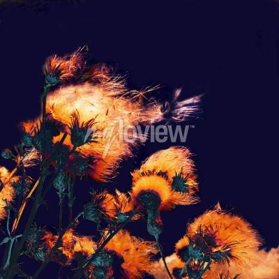 Quadro Silhouettes of bright fuzzy dry flowers and flying seeds on dark background