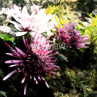 Fotomural Stylized bouquet of chrysanthemums on grunge striped and stained background