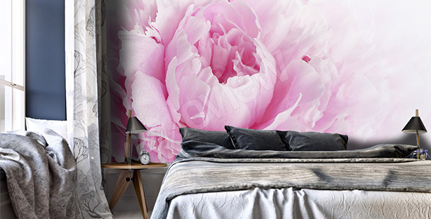 Fotomural peônia côr-de–rosa