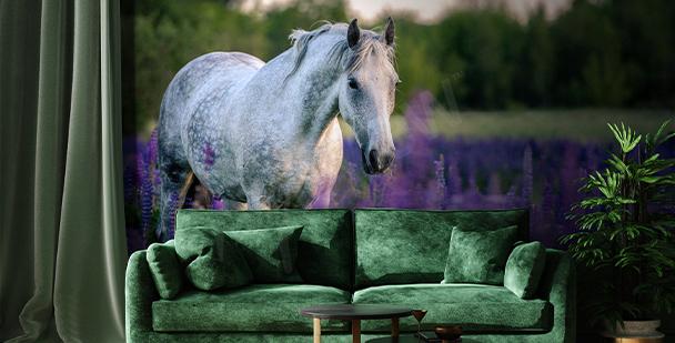 Papel de parede cavalo lavanda