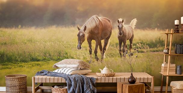 Papel de parede cavalos ao pôr-do-sol