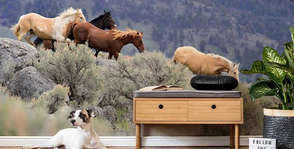 Papel de parede cavalos em galope